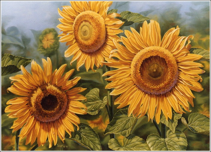 Sunflowers Oil Painting By Judy Sleight