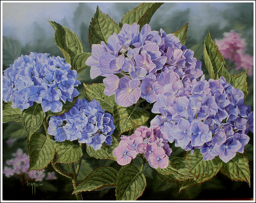 Hydrangea Oil Painting By Judy Sleight